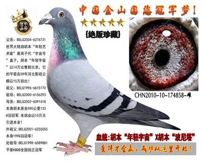 """胡本""""年轻宇宙""""X胡本""""波尼塔""""绝版种鸽"""