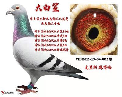 15年舜玉���俱�凡课尻P��王10名