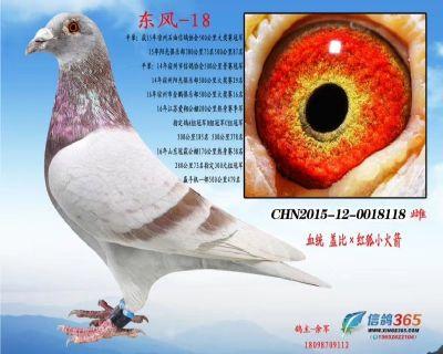 东风-18(已售)