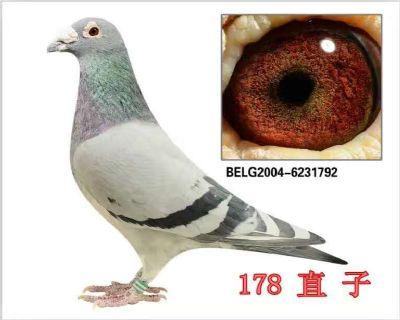 BELG2004-6231792