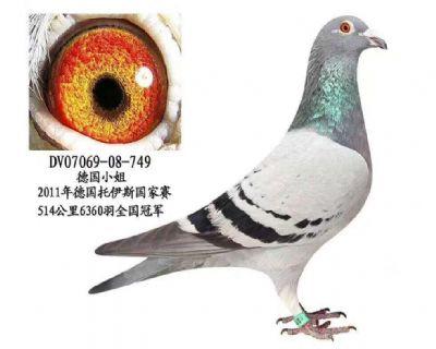 DV07069-08-749