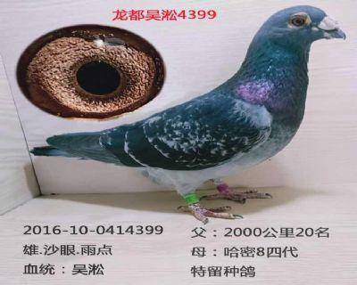 龙都吴淞4399
