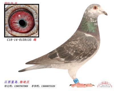 C18-14-0159135雌
