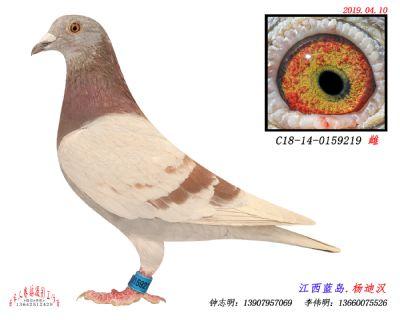 C18-14-0159219雌