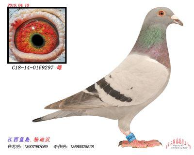 C18-14-0159297雌