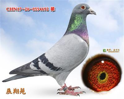怒马回血孙--超级鸟692