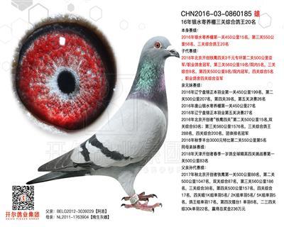 2016年银水寄养棚三关综合鸽王20名