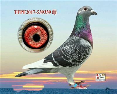 台湾强速189近亲