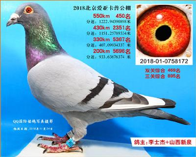 2018年北京爱亚卡普决赛450名