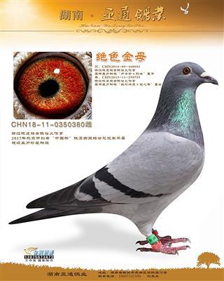 """北京开创者""""中国杯""""铁鹰四关综总冠军平辈"""