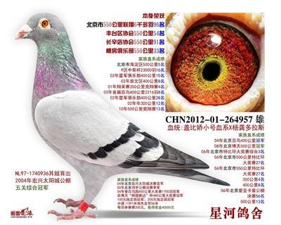 北京星河鸽舍