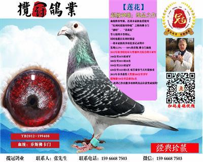 【莲花】千元专区回馈鸽友