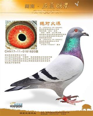 """北京开创者""""中国杯""""铁鹰四关综合冠军平辈"""