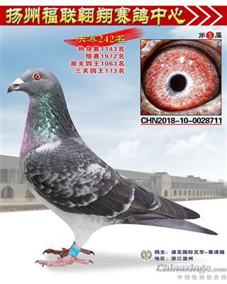 扬州公棚奖鸽