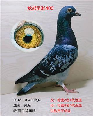 龙都吴淞400