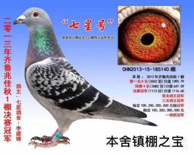 """镇棚之宝""""七星号""""兆佳决赛冠军・鸽王冠军"""