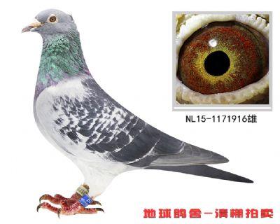 NL15-1171916雄副本