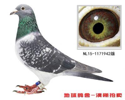 NL15-1171942雄副本