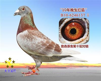 """""""10年晚生红狐""""/詹森原舍第十配对雄"""