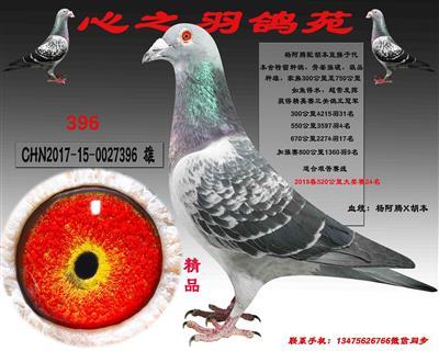 低价出售全棚种鸽,一羽不留