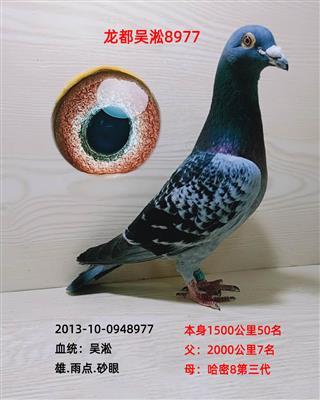 龙都吴淞8977