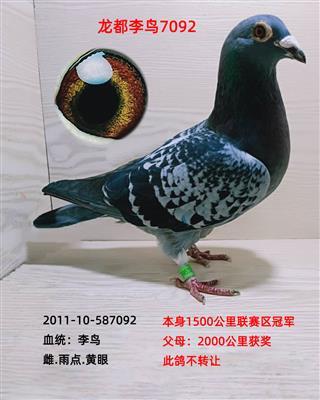 龙都李鸟7092