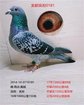 龙都吴淞0181