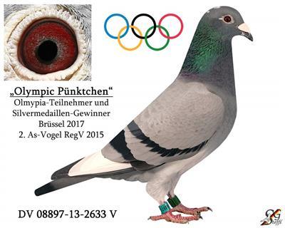 德国奥林匹克代表鸽