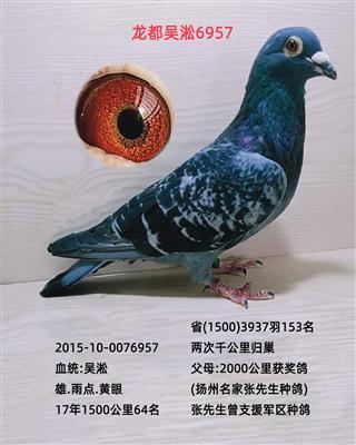 龙都吴淞6957