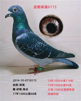 龙都吴淞0173
