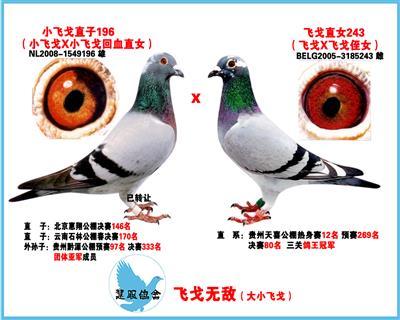 飞戈王朝(小飞戈X大飞戈)