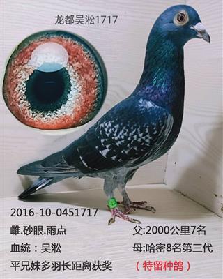 龙都吴淞1717