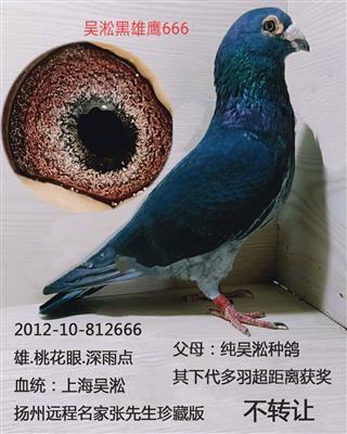 吴淞黑雄鹰666