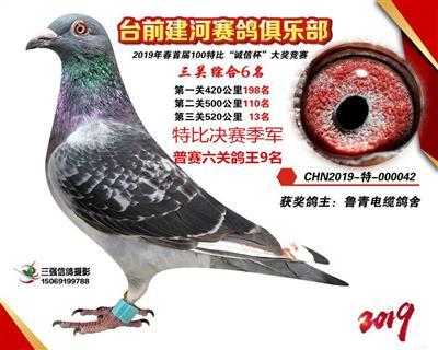 鲁青电缆鸽业