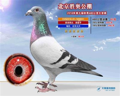 北京胜奥63名