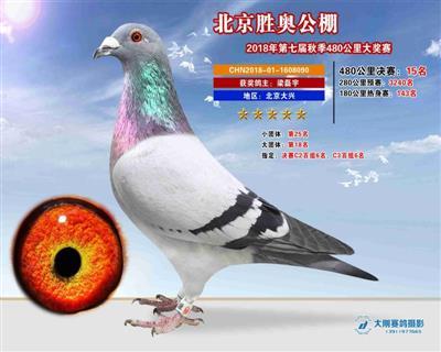 北京胜奥15名