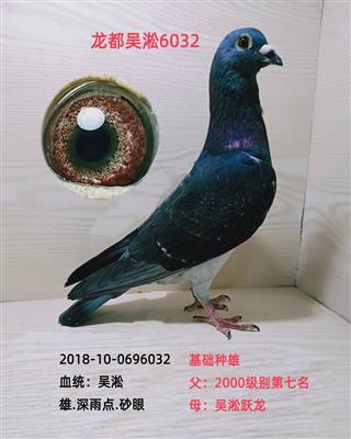 龙都吴淞6032
