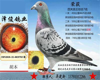 胡本5703