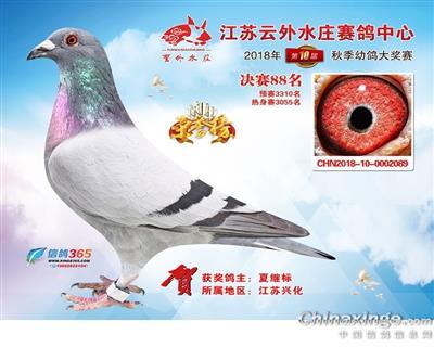 江苏云外水庄公棚决赛88名