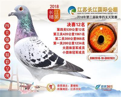江苏长江国际公棚决赛12名