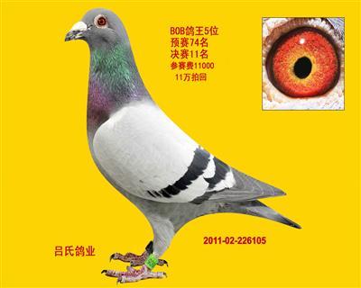 2011年BOB双关鸽王5名