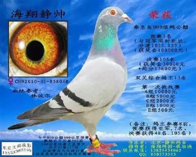 2010BOB双关鸽王13名