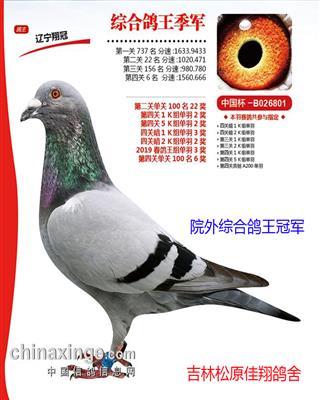 天津(开创)鸽王季军