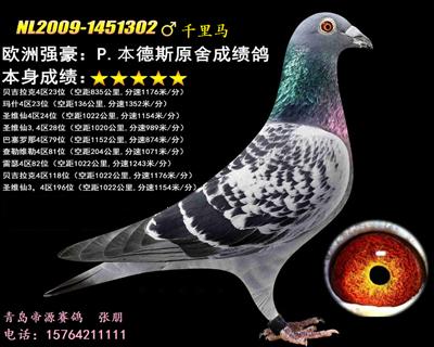 青岛帝源鸽舍