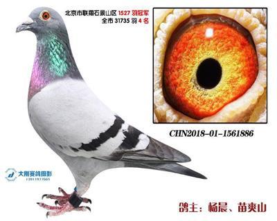 北京市全市联翔31735羽殿军