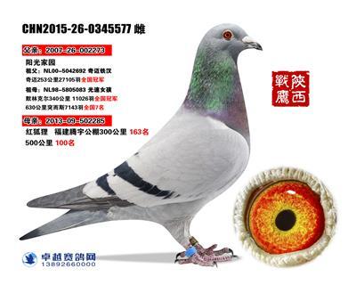 奇迈铁汉577