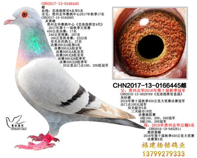 CHN2017-13-0166445