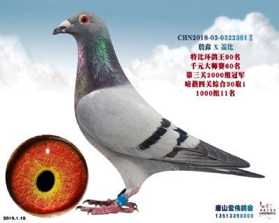 唐山阳光大师赛60