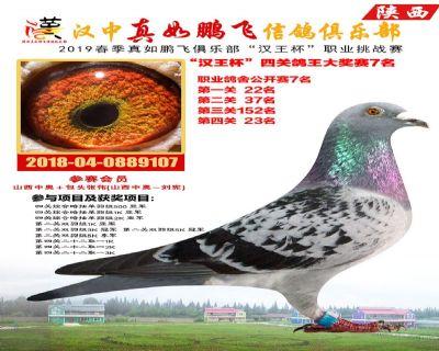 """真如鹏飞""""汉王杯""""四关鸽王大奖赛7名!"""