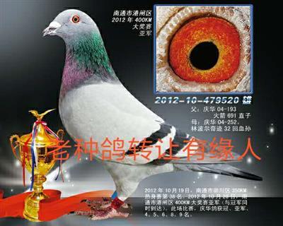 天香520